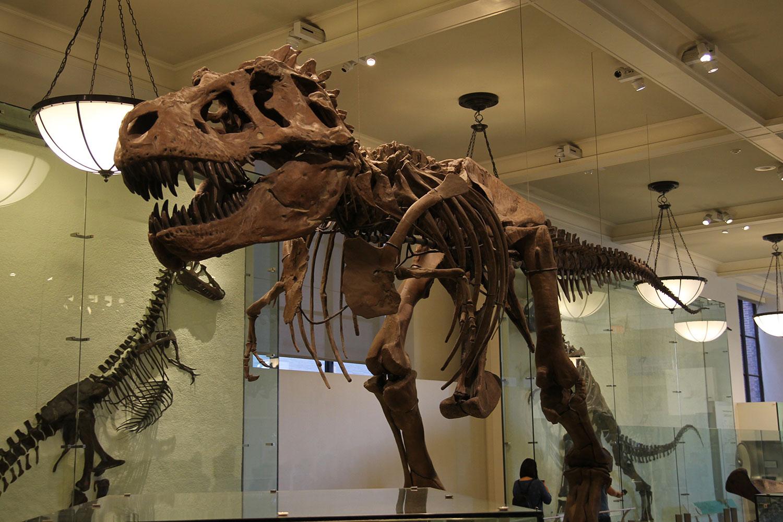 Dinos im American Museum of Natural History // © Choriosity